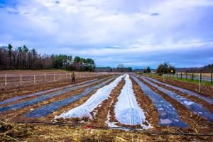 Sub Edge Farm