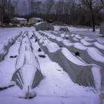winter at farm