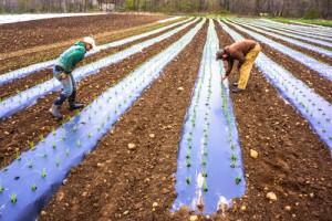 Provider Farm